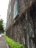 Tenacious creeper. Boston ivy covered the entire building Royalty Free Stock Photography