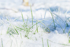 Tenacious grass. Grass green grass snow  fullvitality  ice grass  ice  ice crystal  crystal clear  crystal  jade Royalty Free Stock Images
