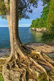 Tenacious Grip. A tree clings to the rocky cliff overlooking Lake Michigan at Cave Point on Wisconsin's Door County Peninsula near Jacksonport Royalty Free Stock Photos