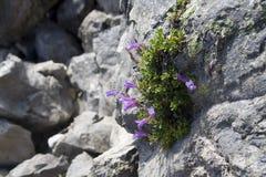 Tenacious plants Royalty Free Stock Photos