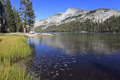 Tenaya Lake in Yosemite Stock Image