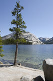 Tenaya Lake in Yosemite National Park Royalty Free Stock Photo