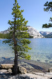 Tenaya Lake in Yosemite Stock Photo