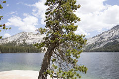 Tenaya Lake, Yosemite National Park Stock Image