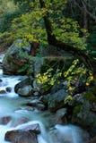 Tenaya liten vikYosemite nationalpark arkivfoto