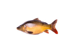 Tench fresh raw fish isolated on white background, clipping path Royalty Free Stock Images