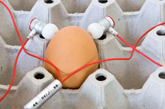 Tend egg. By music in the Egg carton tray stock photo