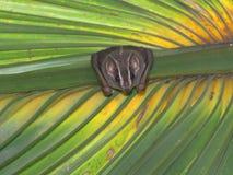 Tenda che fa pipistrello Fotografia Stock Libera da Diritti