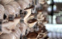 Tenda dell'interno del fungo Immagine Stock Libera da Diritti