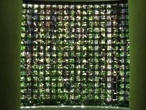 Tenda della pianta Immagine Stock