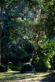 Tenda di campeggio sotto gli alberi alti della giungla immagini stock