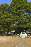 Tenda di campeggio verde in un campeggio della foresta Fotografie Stock Libere da Diritti