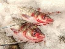 tenda dos peixes no mercado Imagem de Stock