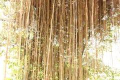 Tenda naturale Fotografia Stock Libera da Diritti