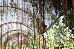 Tenda naturale Fotografia Stock