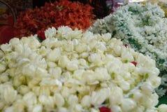 Tenda pequena da flor da Índia de Singapura imagem de stock