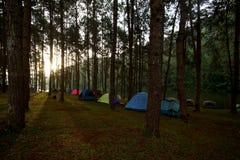 Tende di campeggio al campeggio all'aperto vicino al lago Immagini Stock