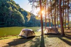 Tende di campeggio sotto i pini con luce solare nel lago pang Ung, Mae Hong Son in TAILANDIA Immagine Stock Libera da Diritti