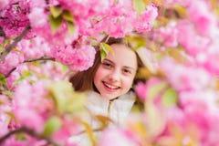 Tender bloom. Cute child enjoy warm spring day. Lost in blossom. Girl tourist posing near sakura. Child on pink flowers. Of sakura tree background. Botany royalty free stock image