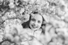 Tender bloom. Cute child enjoy warm spring day. Lost in blossom. Girl tourist posing near sakura. Child on pink flowers. Of sakura tree background. Botany royalty free stock photo