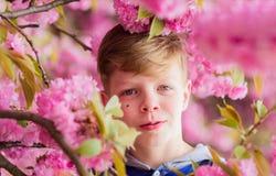 Tender bloom. Cute child enjoy warm spring day. Visit sakura garden. Boy teen posing near sakura. Child on pink flowers. Of sakura tree background. Botany royalty free stock photos