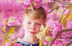 Tender bloom. Cute child enjoy warm spring day. Visit sakura garden. Boy teen posing near sakura. Child on pink flowers. Of sakura tree background. Botany stock images