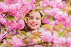 Tender bloom. Girl tourist posing near sakura. Child on pink flowers of sakura tree background. Botany concept. Girl stock photo