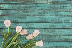 Tender blooming tulips over green wooden background Stock Images