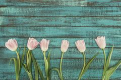 Tender blooming tulips over green wooden background Royalty Free Stock Photography