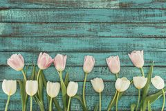Tender blooming tulips over green wooden background Stock Photography