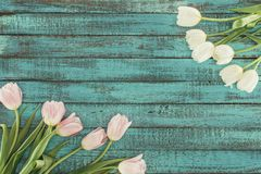 Tender blooming tulips over green wooden background Stock Photos