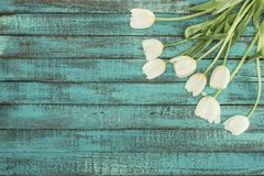 Tender blooming tulips over green wooden background Stock Image