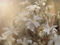 Tender blossoms flowers taken closeup. Stock Photo