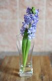 Tender blue hyacinth flowers in a glass vase. Nice pink background, wooden table, spring mood. Tender blue hyacinth flowers in a glass vase with water. Nice pink stock image