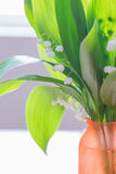 Tender bouquet of lily of the Valley Stock Photography
