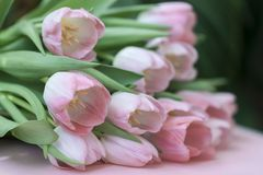 Tender bouquet of pink tulips with green leaves. Spring flowers, floral background for wedding, birthday, Valentine`s Stock Photo