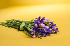 Tender bouquet of spring iris and tulips flowers Royalty Free Stock Photo