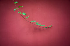 Tender branch in the front of a red wall Stock Images