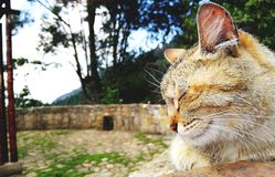 Tender cat sleeping in natural park royalty free stock photos