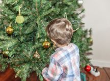 A tender child, puts some balls in a nice decorated Christmas tree, in the living room. Of his house stock image