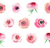 Tender elegant sophisticated wonderful lovely floral herbal spring colorful wildflowers roses with buds pattern watercolor. Hand illustration stock illustration