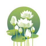Tender elegant white water floral vector illustration. For invitation, greeting, poster. water lily, lotus flowers in nature stylized image Stock Photos