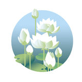 Tender elegant white water floral vector illustration Stock Images