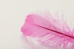 Tender feather on light background for your design, pink color Royalty Free Stock Photo