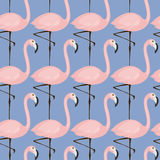 Tender flamingo pattern Stock Images