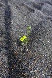 Tender flower Royalty Free Stock Images