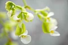 Tender flowers macro Stock Images