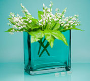 Tender flowers in square glass vase on blue Royalty Free Stock Image