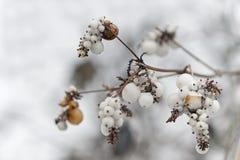 Tender frozen branch of tree Stock Photos