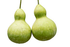 Tender gourd Royalty Free Stock Image